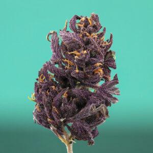 Purpler Dream Closeup